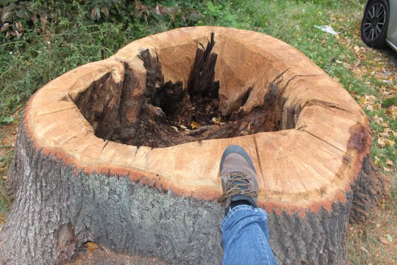 Falkensee: Neue Bäume werden gepflanzt