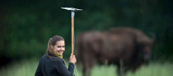 Wisente und Wildpferde liefern Daten über GPS – Heinz Sielmann Stiftung fördert Forschungsarbeit in der Döberitzer Heide