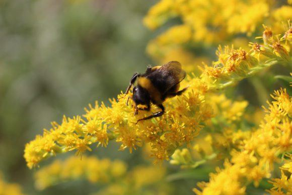 Viele Anmeldungen zum Frühjahrsputz im Stadtgebiet: Falkenseer Umwelttag am 1. April