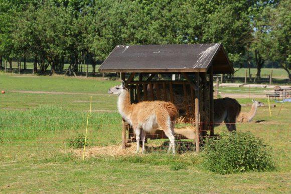 Brandenburger Landpartie: Erlebnispark Paaren beteiligt sich bei der Landpartie am 10. und 11 Juni 2017