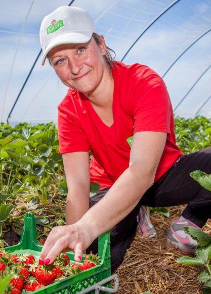 Wieder frische Früchte vom Feld: Karls eröffnet Erdbeersaison in Berlin und Brandenburg