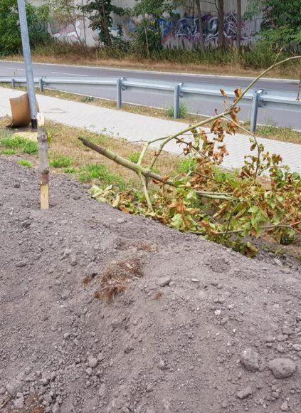 Brieselang: Bäume am Havelkanal geschändet