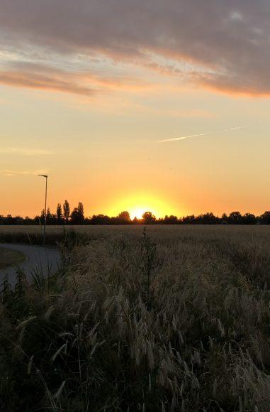 Landkreis Havelland: Vorabinformation zu Dürrehilfen für Bauern