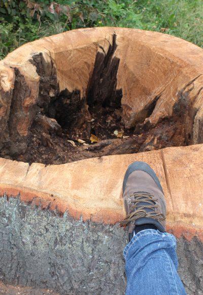 Brieselang: Mehr als 4.000 Bäume im Gemeindegebiet