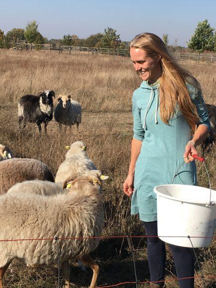 Ehemaliges Schaugehege der Heinz Sielmann Stiftung jetzt Winterstandort für Rinder und Schafe der Familie Querhammer