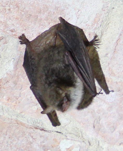 Spandau: Zug der Fledermäuse