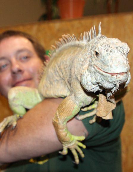 Spinnen & Reptilien: Lehrreiche Tierschau in der Falkenseer Stadthalle