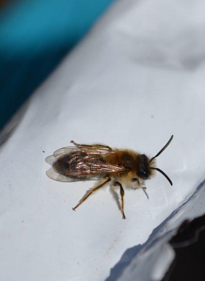 """Nauen: Wir bauen Wildbienen- und Insektenhotels im Nachbarschaftsgarten """"Grünes Eck"""""""