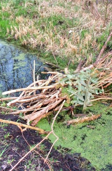 Gewässerschau in Falkensee: Gräben im Auge behalten!