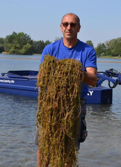 Nymphensee: Seegras wird gemäht