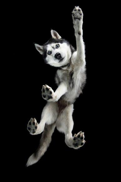 Tierfotografin Nicole Sikorski aus Falkensee: Hunde von unten