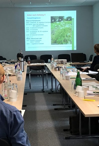 "Natura 2000: FFH-Gebiet ""Brieselang und Bredower Forst"" rückt stärker in den Fokus"