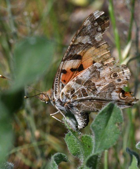 Lassen milde Winter mehr Insekten überleben? Insekten im Winter – Vielfalt der Überlebensstrategien