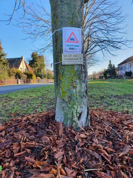 Unterschlupf für Igel – Bauhof Brieselang prüft Laubhaufen