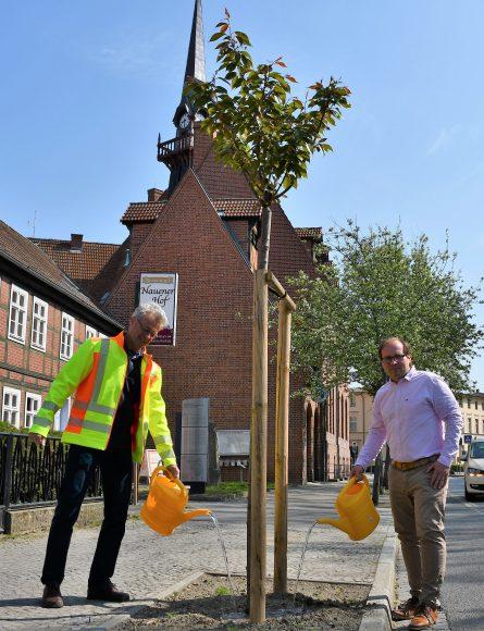 Nauen: Bürgermeister Meger ruft Bürger zum Bäume-Gießen auf