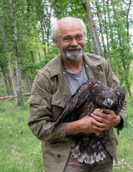 Adler in Sielmanns Naturlandschaft Döberitzer Heide:  Zwei Jungvögel frisch beringt
