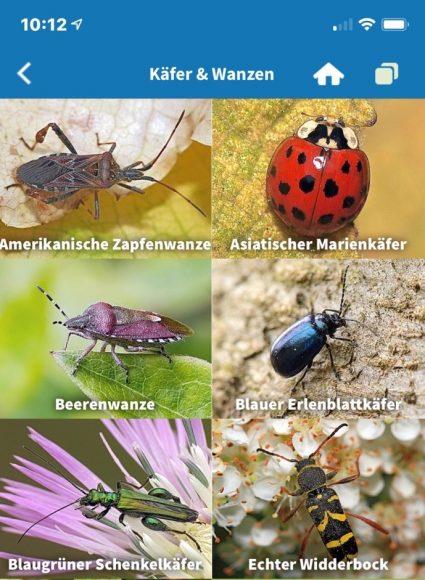 Insektensommer: Jeder kann beim Insektenzählen mitmachen!