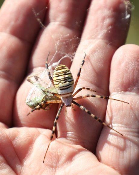Was krabbelt da? Insekten, Spinnen & Wilde Kräuter – Streifzug über eine Wiese in Falkensee!