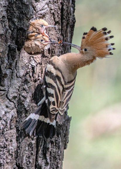3. März ist Tag des Artenschutzes: Großflächige Naturlandschaften der Heinz Sielmann Stiftung bieten Refugien für bedrohte Brutvogelarten