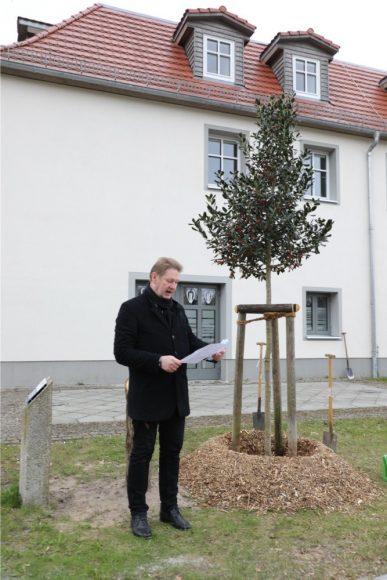 Baum des Jahres 2021: Schönwalde-Glien pflanzt eine Stechpalme am Rathaus!