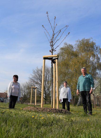Guck mal, was da blüht – Zierkirschbäume für Neukammer