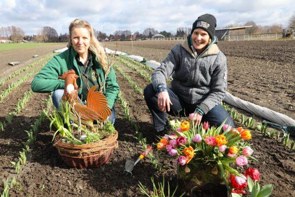 Hofladen Falkensee: Im April kann man Tulpen direkt vom Feld pflücken!
