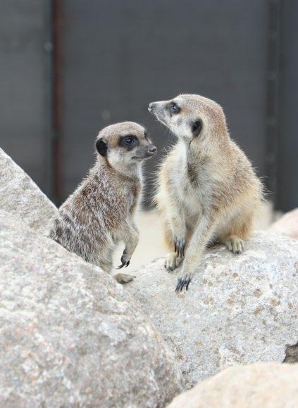 Arche-Haustierpark im Erlebnispark Paaren wächst um Exoten!