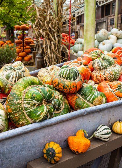 Kürbisträume, Monster-Popcorn und eine Scheune für Angsthasen: Karls Erlebnis-Dörfer starten aufregendes Herbsttreiben